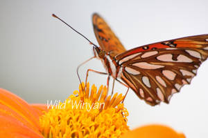A Taste by WildWinyan