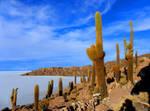 Cacti Island, The Salar Desert, Bolivia by Tomer-DA