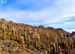 Cacti Attack by Tomer-DA