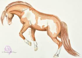 Art Payment: Buckler by RebeccaM-Art