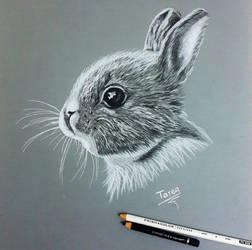 my drawing pencil by tareg009