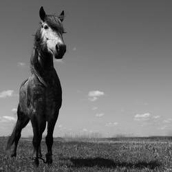 Horse , stay still ::: by frayart