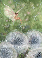 ACEO Dandelion Clocks and Fae by JoannaBromley