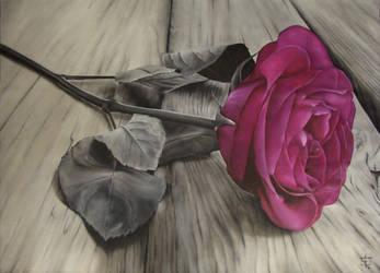 Una Rosa by felixdasilva