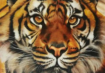 Tigre by felixdasilva