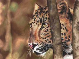 Un Leopardo by felixdasilva