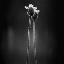 wayside flowers.. by Menoevil