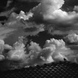 Little wings series 06 by Menoevil