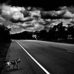 Wayside Dog by Menoevil
