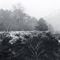 Dreamland XV by Menoevil