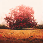 Red dreams by Menoevil