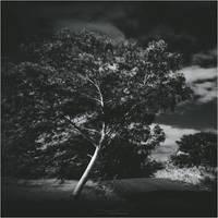Soul Tree VI by Menoevil