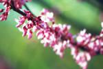 Glimpse of Spring by leanija