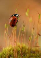Ladybug by naybetx