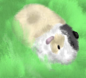 Popcorn the Guinea Pig by littlemisskirby