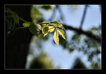 Sunlit leaves by MichelleMarie