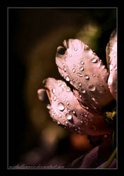 Pink drops by MichelleMarie