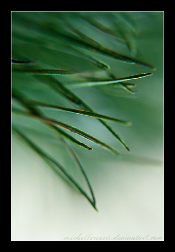 Pine Needles by MichelleMarie
