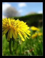 Dandelion 2 by MichelleMarie