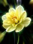 Yellow Dahlia by April-Snowflake