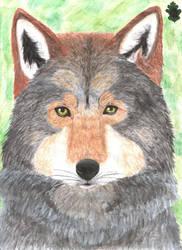 Wolf Portrait by Yama-no-Mouken