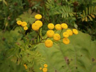 Yellow by ShaaviDeNevoa