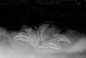 Lily in the sky by Ealin