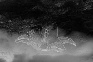 Lily in the sky II part by Ealin