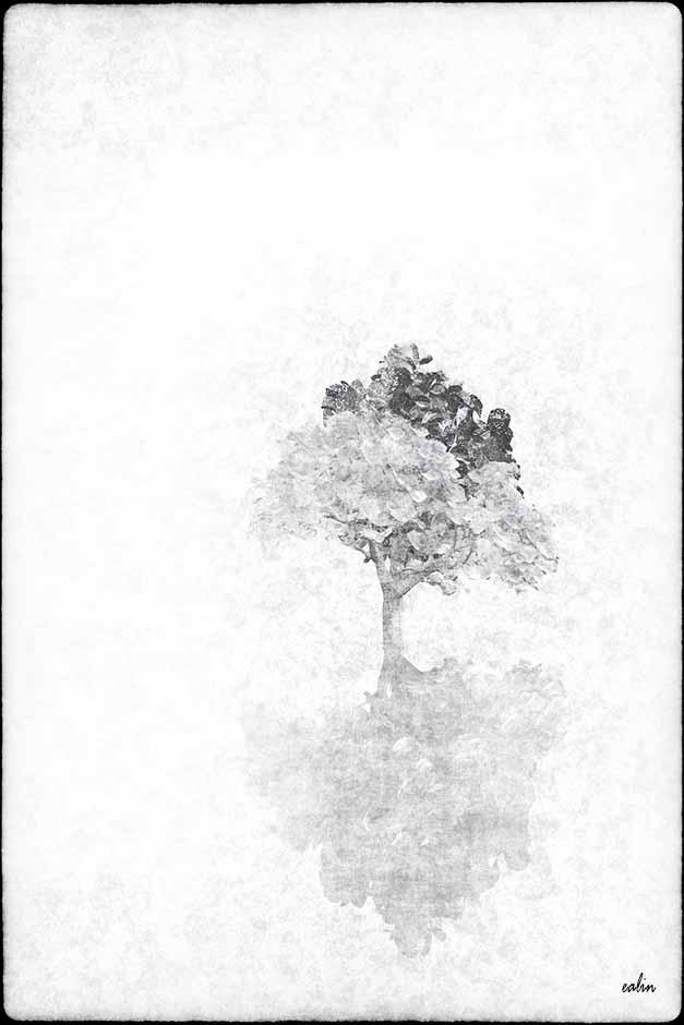 White Tree by Ealin