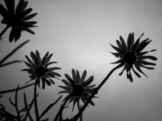 Dark flowers by TheEmge