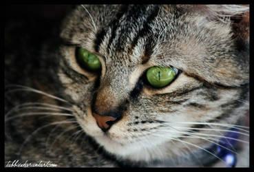 Cat Leila Green Eyes by tabbie