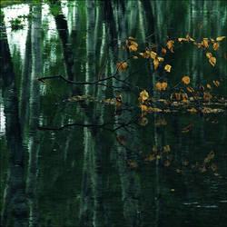Birchwood by Abigel