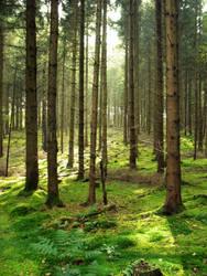 Autumn Forest 11 by SerapStock