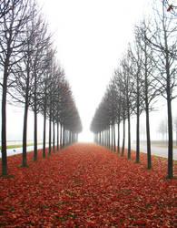 Leaves are Falling..II by SerapStock