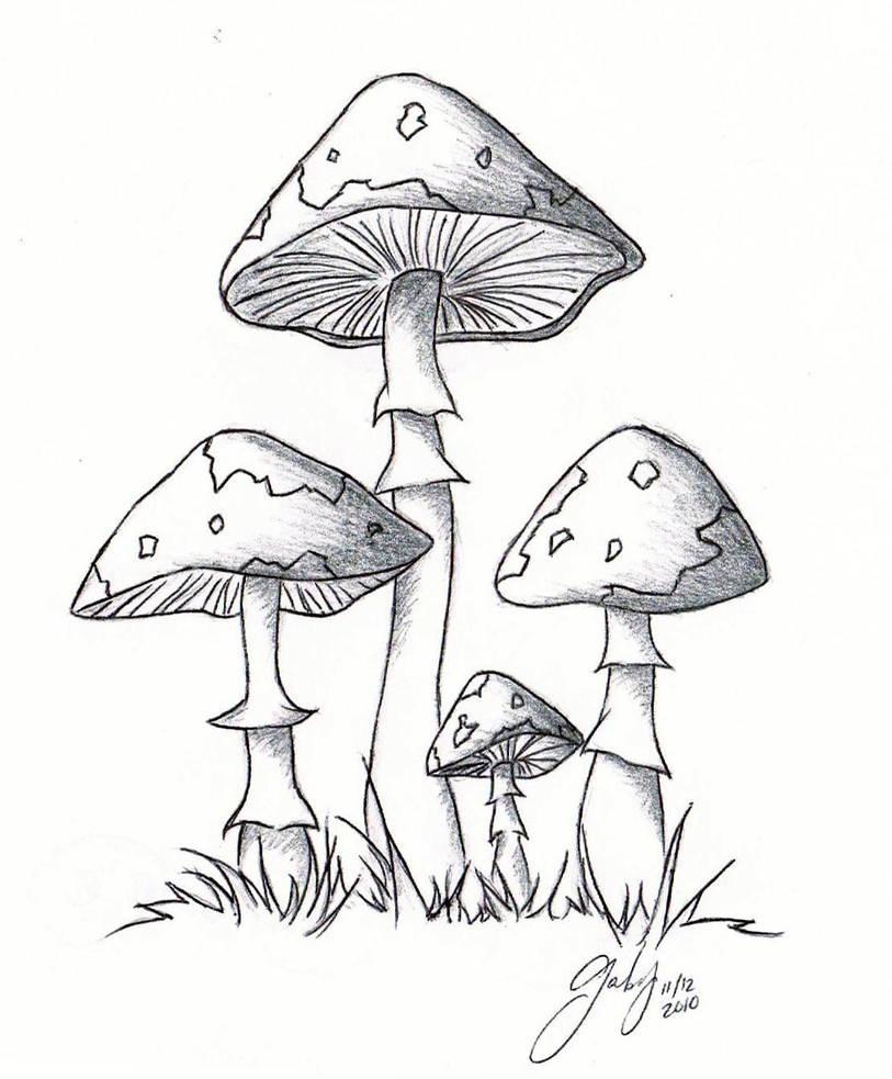 1 lil 2 lil 4 lil mushrooms by chibipandamonster on deviantart Agaricus Bisporus 1 lil 2 lil 4 lil mushrooms by chibipandamonster