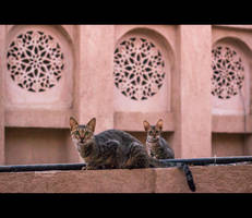 Urban Cats - 20 by MARX77