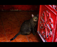 Urban Cats - 24 by MARX77
