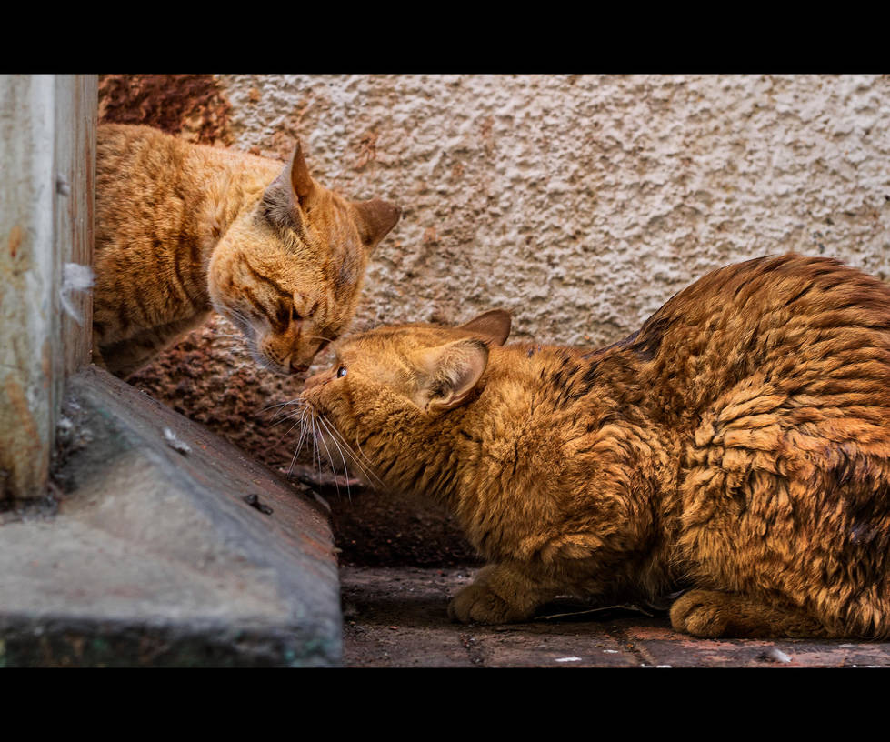 Urban Cats - 77 by MARX77