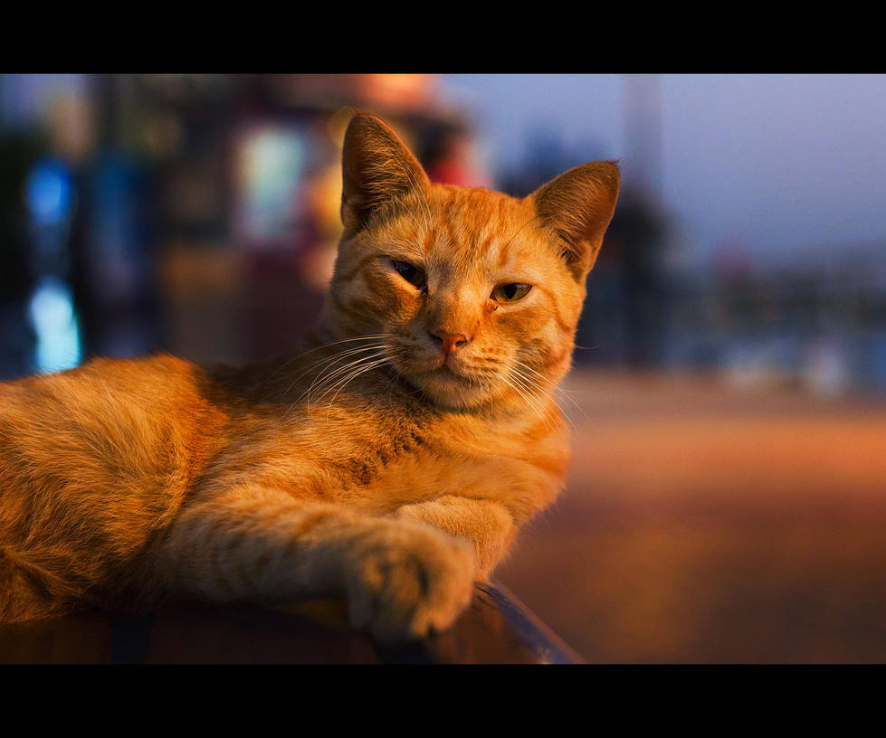 Urban Cats - 78 by MARX77