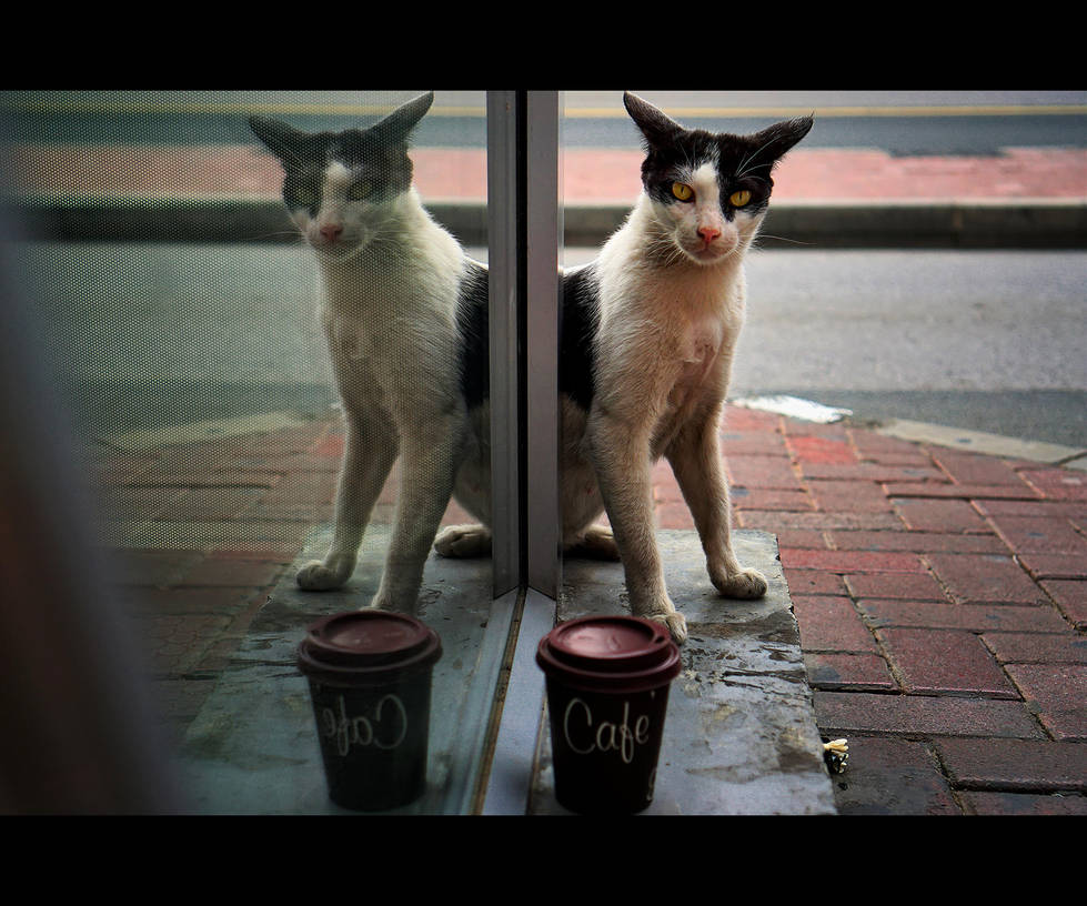 Urban Cats - 84 by MARX77