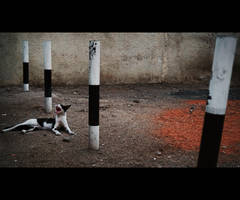 Urban Cats - 86 by MARX77