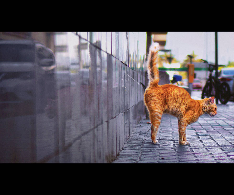 Urban Cats - 100 by MARX77