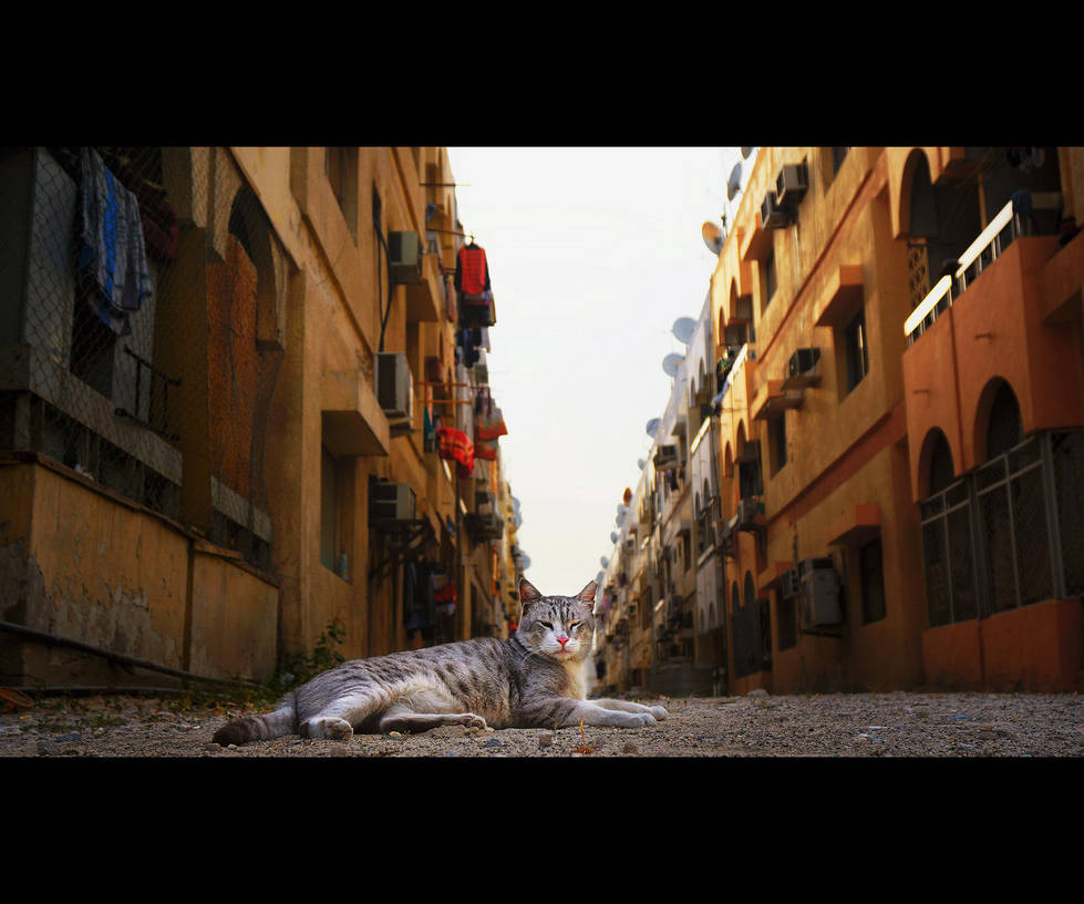 Urban Cats - 101 by MARX77
