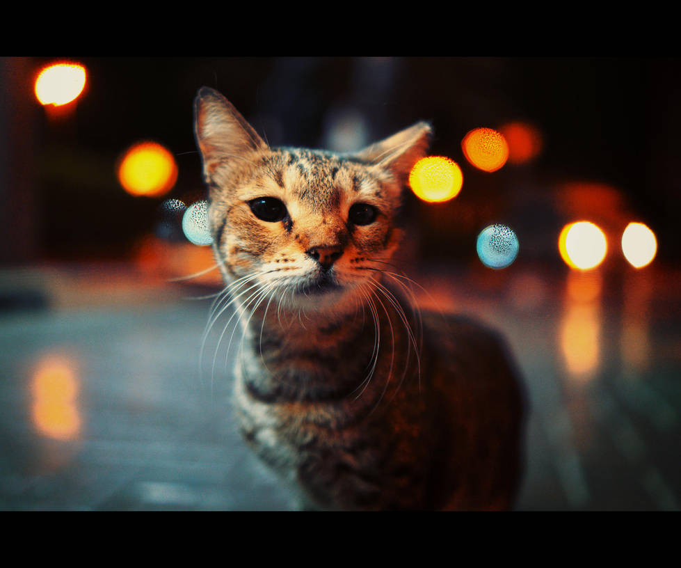 Urban Cats - 105 by MARX77