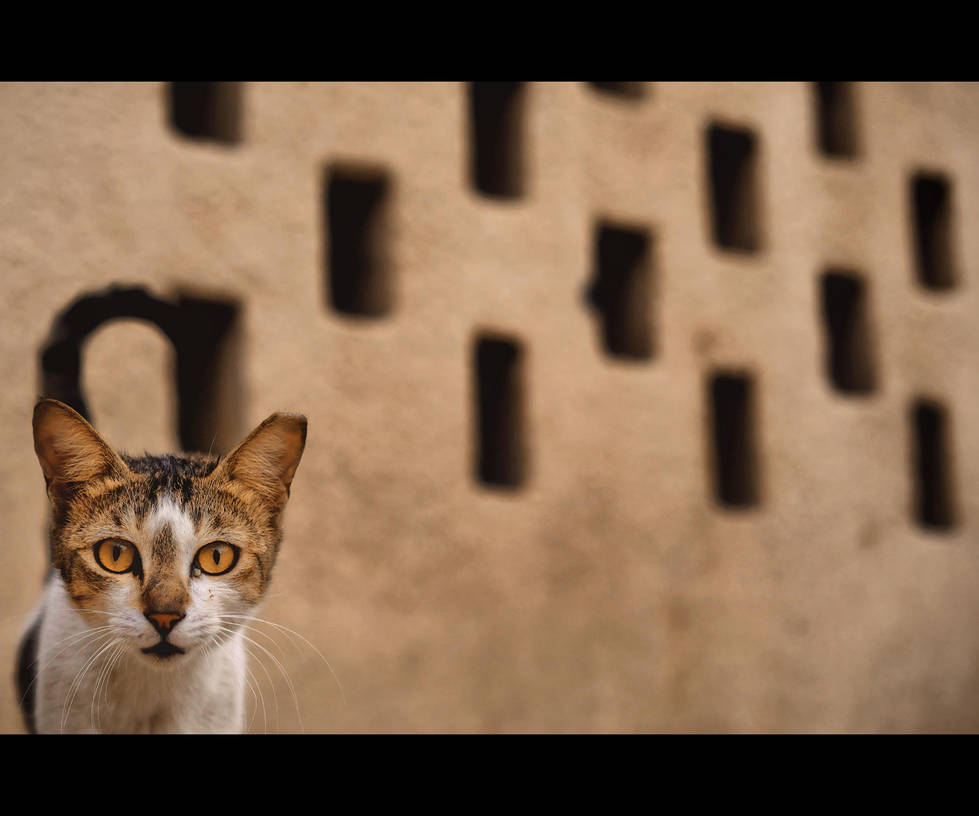 Urban Cats - 109 by MARX77