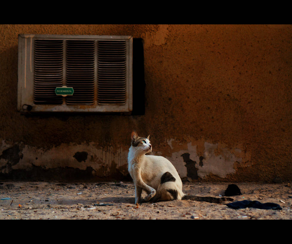 Urban Cats - 110 by MARX77