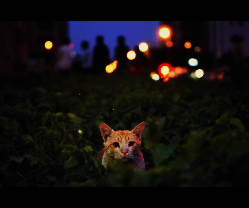 Urban Cats - 114 by MARX77