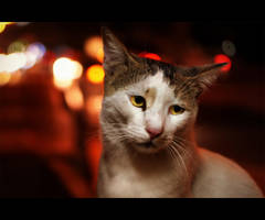 Urban Cats - 125 by MARX77