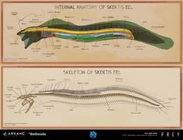 Prey - Eel Anatomy Poster by dsorokin755