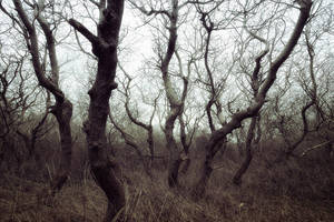 Lost in trees by TrollDuNord